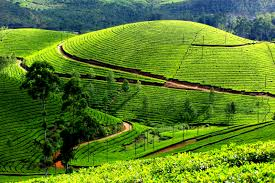 Kannur-Cochin-Munnar Tour Package